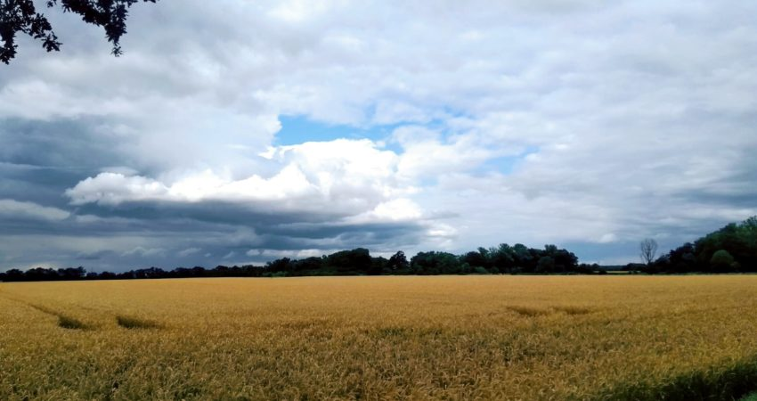 Foto von einem Feld in der Börde