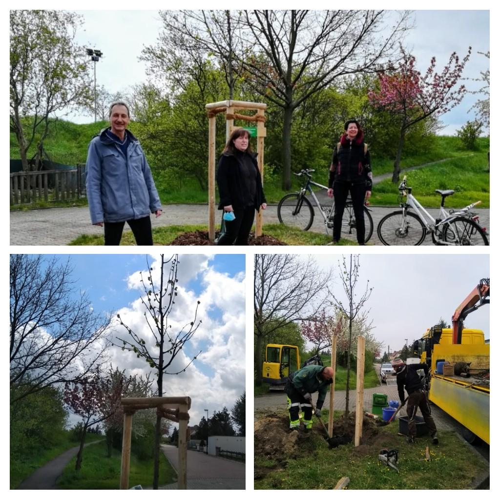 Unser Baum für Glindenberg